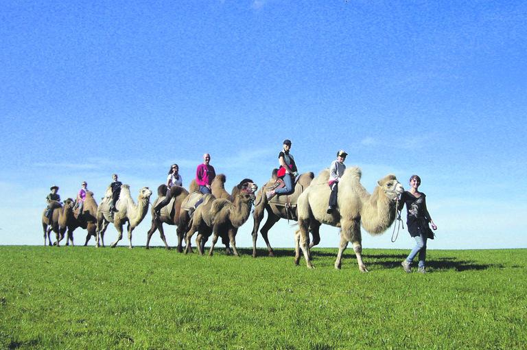 Tierisches Oberland | Kamele