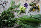 Funde eines Spaziergangs im Frühling: Köstlicher Wildkräutersalat entsteht daraus